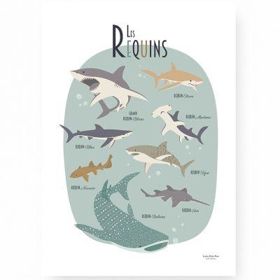 Affiche A3 Les requins  par Lutin Petit Pois