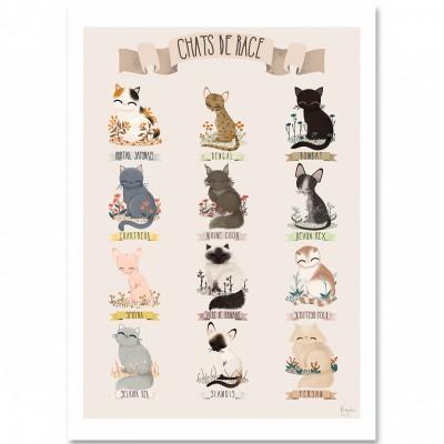 Affiche A3 Les chats de race beige  par Kanzilue