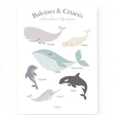 Affiche A3 Baleine et cétacés  par Lutin Petit Pois