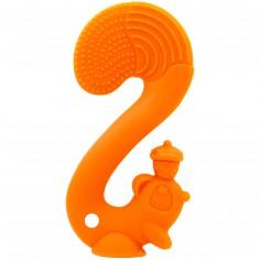 Ecureuil de dentition orange