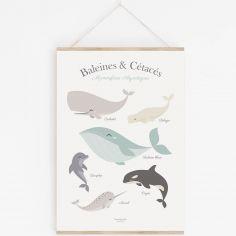 Affiche A3 Baleine et cétacés avec support
