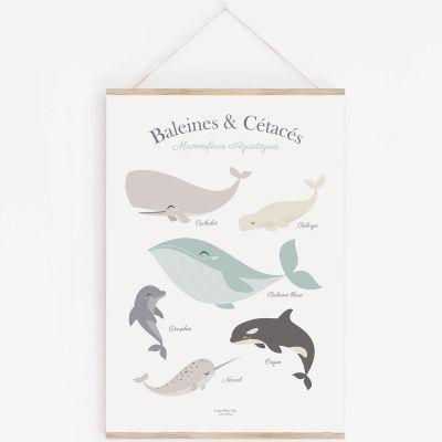 Affiche A3 Baleine et cétacés avec support  par Lutin Petit Pois