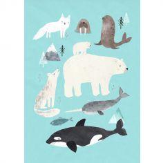 Affiche Animaux arctiques (50 x 70 cm)