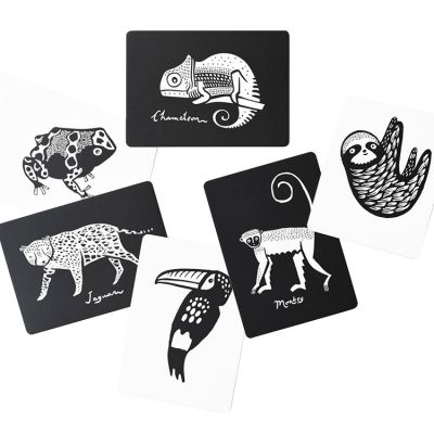 Cartes imagier pour bébé forêt tropicale Wee Gallery